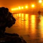 stary rynek płockie lwy