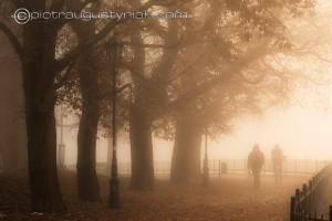 Płock miasto we mgle